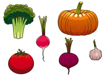 garlic: Saludable calabaza madura de naranja granja, tomate rojo, verde brócoli, rábano rosa, verduras de remolacha y el ajo morado aislados en blanco Vectores