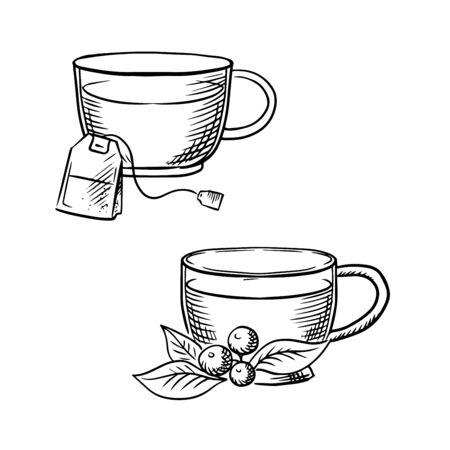 teatime: Cups of hot tea with teabag and cowberry branch with fruits and leaves. Sketch images for food and drinks theme Illustration