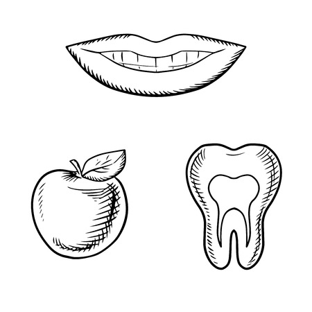 toothy smile: Pretty toothy smile, fresh apple fruit and cross section of healthy tooth with roots, for dental care or dentistry theme design. Sketch icons
