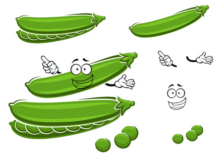 in peas: Funny cartoon green pods of sugar pea cartoon character with juicy seeds, for agriculture harvest or farming theme. Isolated on white