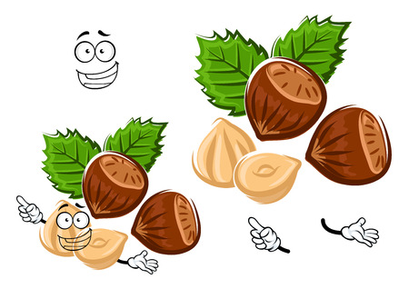 the kernel: Healthful happy hazelnut cartoon character with brown nuts, shelled kernel and carved green leaves, isolated on white