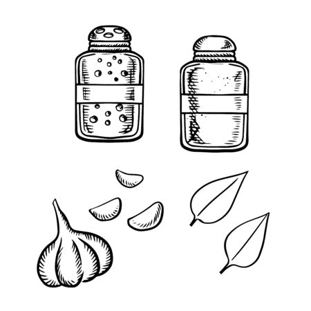 fresh vegetable: Salt and pepper shakers, fresh garlic vegetable with gloves and basil leaves sketch icons. For food or spices theme design Illustration