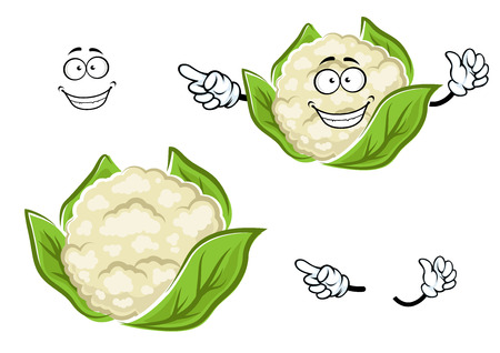 head of cauliflower: Happy ripe cauliflower vegetable cartoon character with white head of juicy cabbage, wrapped with green leaves Illustration