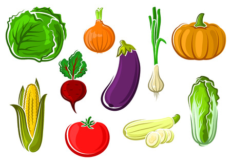 Ripe fresh tomato, cabbage, corn, onion, pumpkin, zucchini, eggplant, beet, scallion and chinese cabbage vegetables isolated on white background Illustration