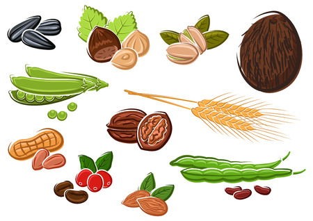 sweet pea: Coconut, walnuts, peanuts, roasted and fresh coffee beans, pistachios, almonds, green pods of sweet pea and beans, sunflower seeds, hazelnuts and wheat ears Illustration