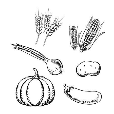 green wheat: Ripe autumn pumpkin, corn cobs, potato, green onion, eggplant vegetables and wheat ears. Sketch icons for vegetarian food or healthy nutrition themes design