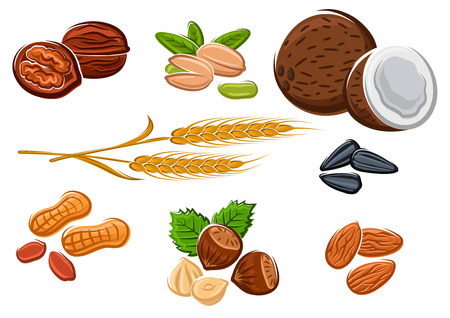 Tasty walnuts, peanuts, almonds, hazelnuts, pistachios, coconuts, sunflower seeds and wheat isolated on white, for vegetarian food and healthy snack design Vectores