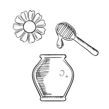 dipper: Natural healthful honey in glass jar with wooden dipper and daisy flower. Healthy nutrition theme design. Sketch elements