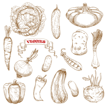 common bean: Healthy organic cabbage, carrot, pepper, potato, onion, cucumber, zucchini, pea, pattypan, squash, leek, kohlrabi and common bean vegetables. Sketched vegetables on white, for agriculture or vegetarian food design Illustration