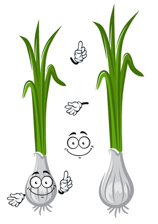 pungent: Cartoon spring green onion vegetable with spicy white bulb and long fresh leaves. Healthy vegetarian food or natural spices themes usage Illustration