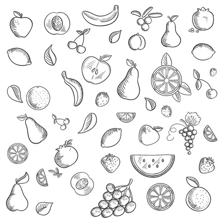 apricots: Fruits and berries sketched icons with whole and sliced apples, bananas, pears, apricots, pomegranates lemons oranges cherries grapes, strawberries, cranberries and watermelon. Sketch style Illustration