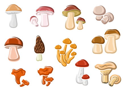 champignon: Forest delicacy edible mushrooms set with orange chanterelle, brown cap, birch, pine and king boletes, champignon, black morel, porcini and honey agaric. For recipe book or healthy vegetarian nutrition design usage Illustration