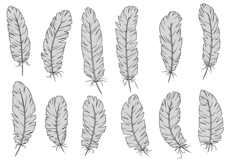 bird feathers: Light gray bird feathers with curved quills and tousled fluffy barbs. Isolated on white