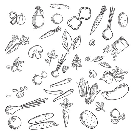 zanahorias: verduras y hierbas frescas bocetos creados con el tomate, la zanahoria, la cebolla, el pepino, el champi��n, patata, ma�z, chile y pimiento, aceitunas, berenjena, remolacha, guisantes verdes, ajo, hierbas y aceite de oliva Vectores