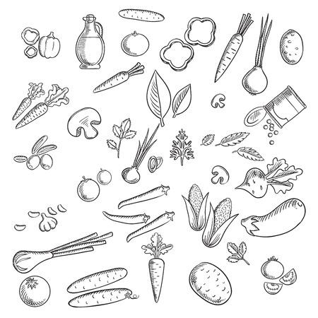 Verse groenten en kruiden schetsen ingesteld met tomaat, wortel, ui, komkommer, champignons, aardappelen, maïs, peper en paprika, olijven, aubergine, bieten, groene erwt, knoflook, kruiden en olijfolie Vector Illustratie