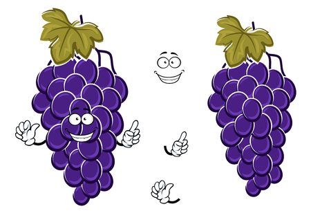 Happy cartoon bunch of blue grape fruits with large berries on curved grapevine with green leaf.