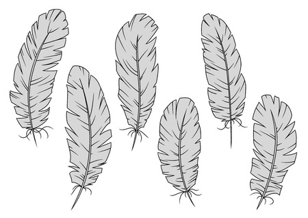 feathering: Gray quill feathers isolated on white.