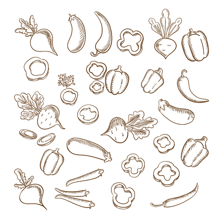 beets: Sketch of fresh beets with lush haulms, chili peppers, eggplants, sliced and whole bell peppers vegetables. For agriculture or vegetarian food or cooking design