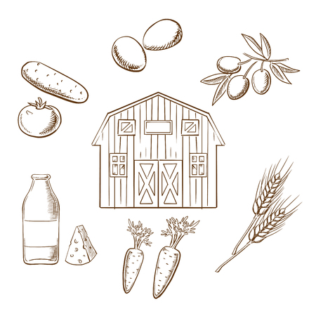 crop circle: Farming and agriculture sketch design showing various crop arranged in a circle around a barn. Tomato, olives, wheat, carrots, eggs and dairy products vector sketches