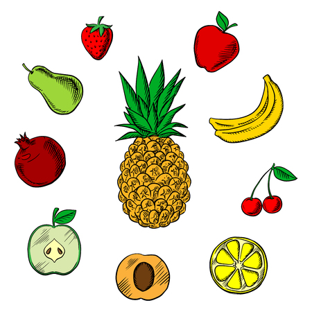 sliced tree: Colorful fresh fruits icons in sketch style with tropical pineapple,  surrounded with green and red apples, orange, apricot, bananas, pear, pomegranate, strawberry and cherry