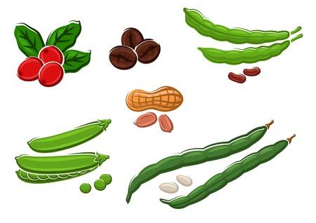 légumineuses frais assortis avec pois, runner et les haricots, les arachides dans leurs cosses et les grains de café. Isolé sur blanc, vecteur