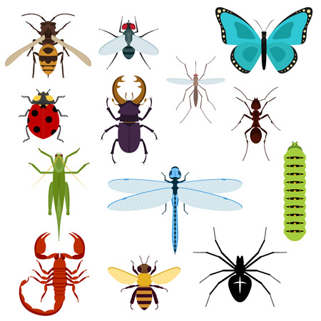 mosca caricatura: Colorido vista superior insectos iconos con las abejas, saltamontes, hormigas, mosca, libélula, mariquita, araña, mosquitos, oruga, ciervo volante y el escorpión. Aislado en blanco