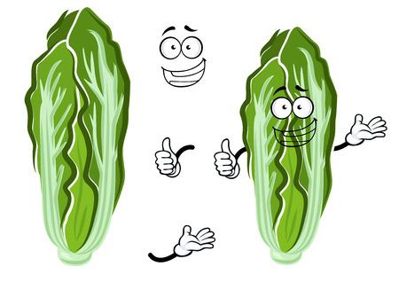repollo: la cabeza verde y blanco del vehículo de la col china con hojas frescas y crujientes. Sonriendo carácter repollo para el libro de receta vegetariana, comida sana o el diseño de alimentos