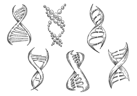 genetic: Modern stylized biological models of DNA with double helices. Medicine, genetic science or biotechnology design usage. Sketch style vector icons Illustration