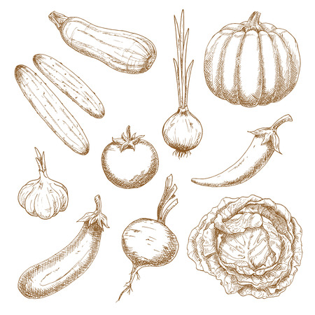 old fashioned: Vegetables sketch icons in vintage style for agriculture harvest, old fashioned recipe book or menu design Illustration