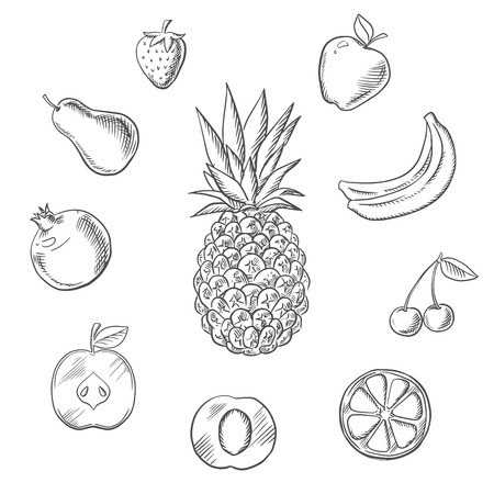Fresh fruits and berries with tropical pineapple, surrounded by whole and sliced apples, orange, apricot, lemon, bananas, pear, pomegranate, strawberry and cherry. Vector sketch Illustration