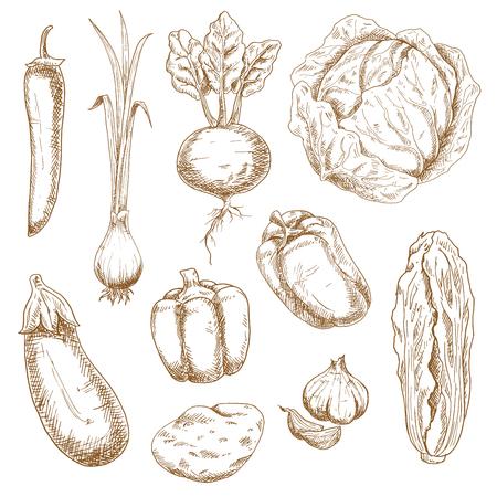 Vintage sketch illustration vectorielle de légumes de la ferme, comme le chou, l'oignon de printemps, le piment et le poivron, l'ail, l'aubergine, la pomme de terre, la betterave et le chou chinois. Nice Menu rétro stylisé, livre de recettes ou des accessoires de cuisine conception Vecteurs