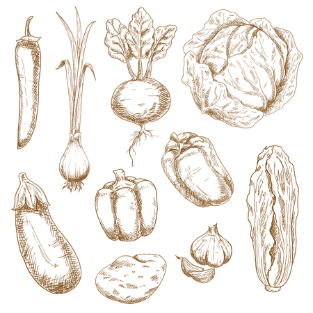beet: Vintage sketch vector illustration of farm vegetables, such as cabbage, spring onion, chilli and bell peppers, garlic, eggplant, potato, beet and chinese cabbage. Nice for retro stylized menu, recipe book or kitchen accessories design Illustration