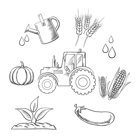 corn on the cob: Agriculture and farm sketched objects with tractor water, watering can, plant, pumpkin, cereal ears, corn cob and eggplant. Vector sketch style