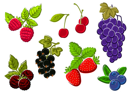 Cherry, strawberry, grape, blueberry, blackberry, raspberry and currant berries isolated on white. For dessert food and agriculture design usage