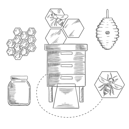 industry design: Honeycomb sketch design with bees flying near beehives, honeycombs and glass jar with honey for beekeeping industry design