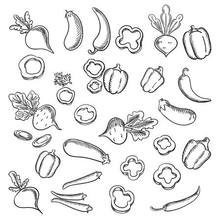 lush: Fresh beets with lush haulms, chili peppers and eggplants, sliced and whole bell peppers vegetables sketch icons