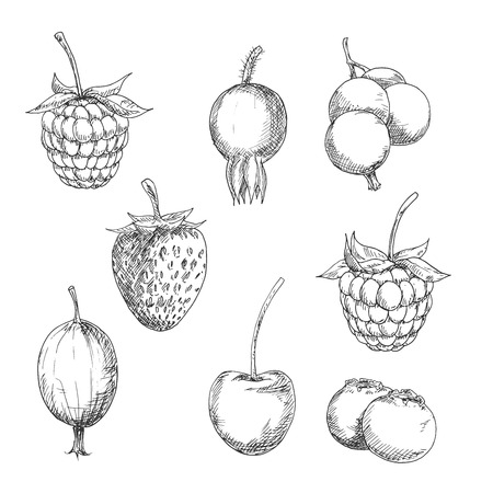Berry fruits sketches of sweet strawberry and raspberry, currant and gooseberry, blackberry and cherry, blueberry and briar fruits. Kitchen accessories, retro stylized recipe book or agriculture design usage