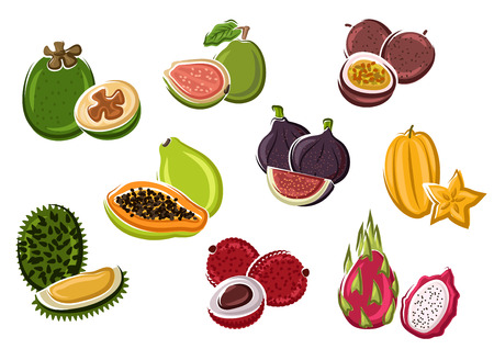 Exotic tropical fresh papaya and passion fruit, fig and lychee, pitaya and feijoa, starfruit, guava and durian fruits in cartoon style. Dessert recipe, natural food or tropical cocktail design usage Stock Illustratie