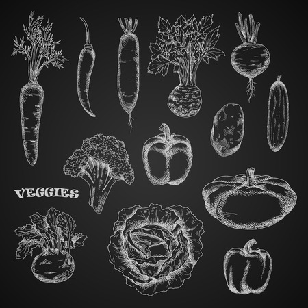 veggies: Chalk sketched veggies on blackboard. Carrot, celery and kohlrabi with fresh leaves, spicy cayenne and bell peppers, potato and cabbage, broccoli and cucumber, pattypan squash, beet and daikon vegetables Illustration