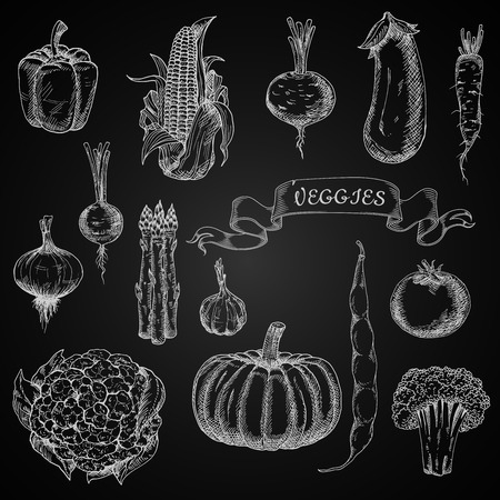 veggies: Pumpkin and tomato, onion and garlic, eggplant and bean, broccoli and beet, bell pepper and corn, asparagus and cauliflower, radish and daikon vegetables chalk sketches on blackboard for agriculture or restaurant menu design