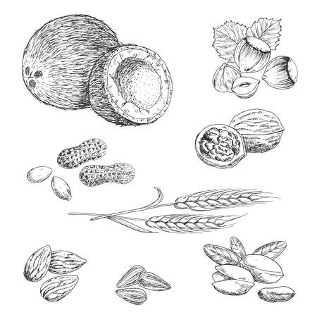 Geschetst noten, bonen, zaden en tarwe in retro graveren stijl met pinda, kokosnoot, hazelnoten, walnoten, amandelen, pistachenoten, zonnebloempitten en tarwe oren. Landbouw, vegetarische snack, receptenboek ontwerp gebruik