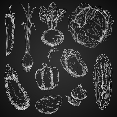 recipe book: Retro engraving vegetables design for recipe book, vegetarian menu, healthy food themes Illustration
