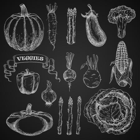 veggie: Chalk sketches of farm vegetables