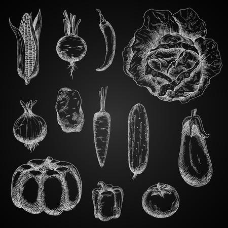 aubergine: vegetables chalk sketches on chalkboard Illustration