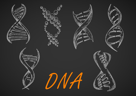 strands: Chalk sketched DNA helix models on blackboard, composed of abstract twisted strands and dots. May be use in medicine, science research or genetic technology theme design