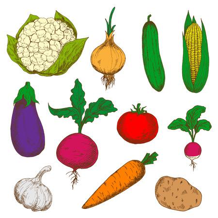 haulm: Isolated colorful sketches for recipe book, vegetarian menu, kitchen interior design Illustration