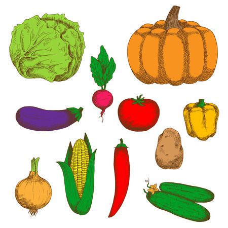recipe book: Retro stylized vegetables sketches for agriculture harvest, recipe book, vegetarian menu design usage
