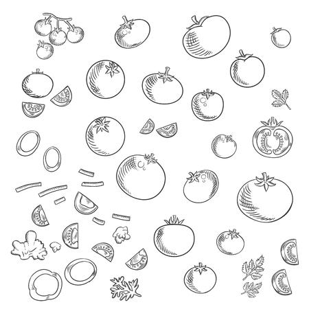 tomate cherry: Frescas y maduras rojos tomates vehículos en estilo plano con enteros, mitades y rodajas de tomate jardín con los tallos verdes, rama de dulce de tomate cherry, tomates picados y verduras con ramitas de perejil Vectores