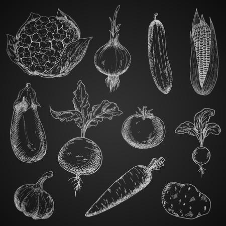 veggies: Blackboard with sketches of tomato and cucumber, carrot and onion, corn and radish, eggplant and garlic, beet, potato and cauliflower vegetables. Great for restaurant chalkboard menu, recipe book, kitchen interior design