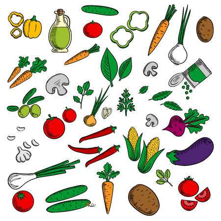 Farm vegetables and herbs sketched tomato and carrot, onion and cucumber, mushroom and potato, corn cob, chili and bell pepper, olives and eggplant,  beet and green pea, garlic and olive oil